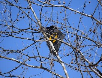 kite-in-tree-2152666_1920